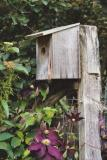 birdhouse with vining clematis
