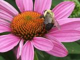 busy bee at work