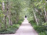 birch walk at stan hywet