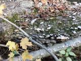 old damp log