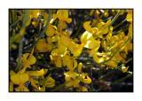 Lesbos - flora - DSCN5068.jpg