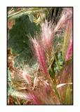 Lesbos - flora - DSCN5164.jpg