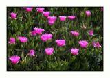 Lesbos - flora - DSCN5184.jpg