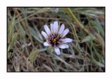 Lesbos - flora - DSCN5209.jpg