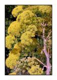 Lesbos - flora - DSCN5447.jpg