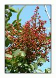 Lesbos - flora - DSCN5451.jpg