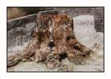 Lesbos - Petrified Forest - DSCN5570.jpg