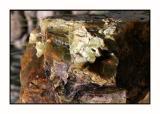 Lesbos - Petrified Forest - DSCN5587.jpg