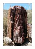 Lesbos - Petrified Forest - DSCN5590.jpg