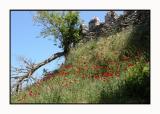 Lesbos - klooster Ypsilou - DSCN5627.jpg