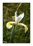 Lesbos - flora - DSCN5736.jpg