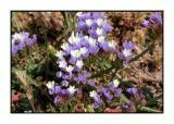 Lesbos - flora - DSCN5799.jpg