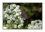 Lesbos - flora - DSCN5863.jpg