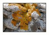 Lesbos - korstmos - DSCN5856.jpg