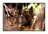 Lesbos - Makri - schildpad - DSCN5917.jpg