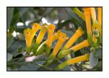 Lesbos - flora - DSCN6046.jpg