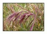 Lesbos - flora - DSCN6188.jpg