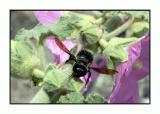 Lesbos - insecten - DSCN6356.jpg