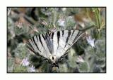 Lesbos - vlinder - DSCN6323.jpg