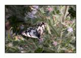 Lesbos - vlinder - DSCN6345.jpg