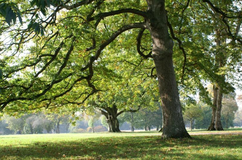 Trees  Birr Castle Demesne