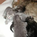 Amante's litter F 12 days