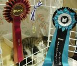 Boogie and his rosettes.