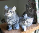 Faust Silver ja Figo,. kolme veljestä