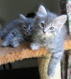 Tiger ja veljensä Otto