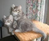 Otto ja Faust poseeraavat:-)