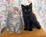 Aslak and Figo