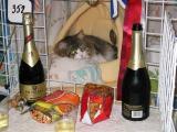Still having a party???