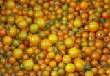 Golden cherry tomatoes