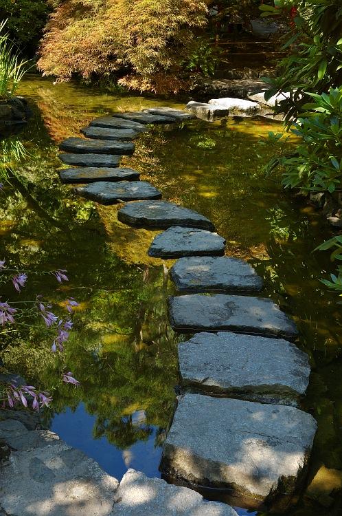 Stone steps on pond.jpg