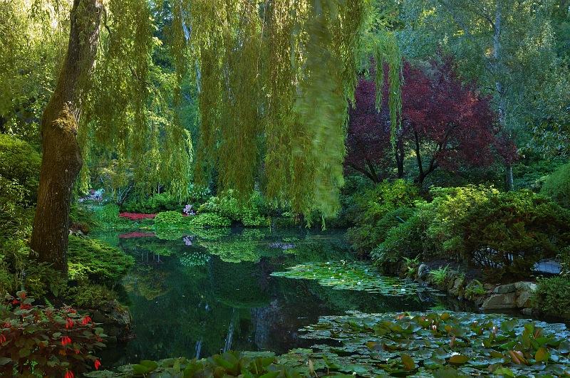 Sunken garden pond.jpg