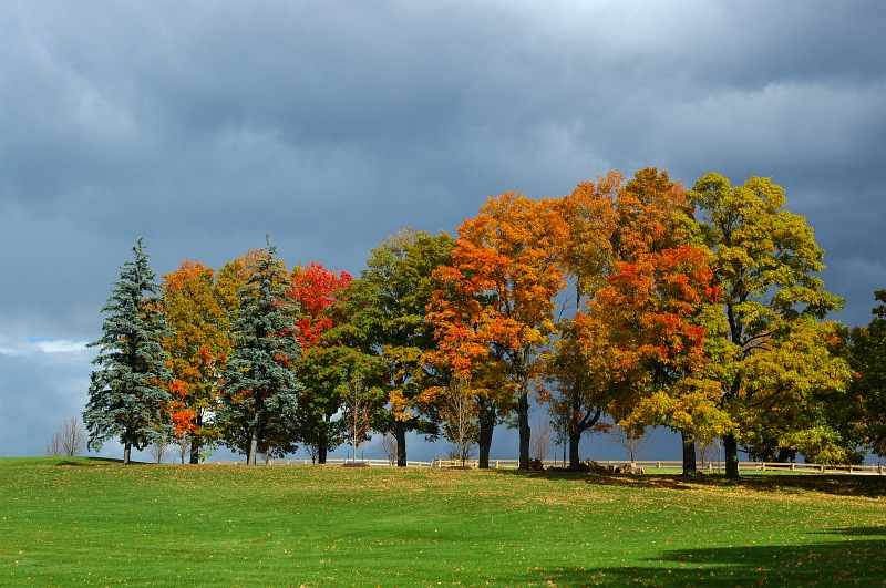 Fall trees after storm.jpg