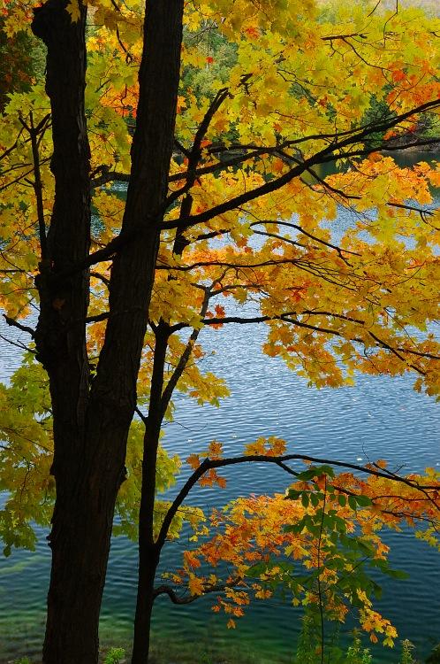 Red Leaves on Crawford Lake.jpg