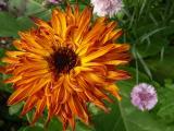 NH Flower ~ July 9th