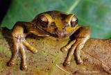 Frog Photos