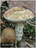 Fungi2.
