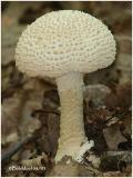 Fungi8