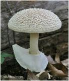 Fungi11