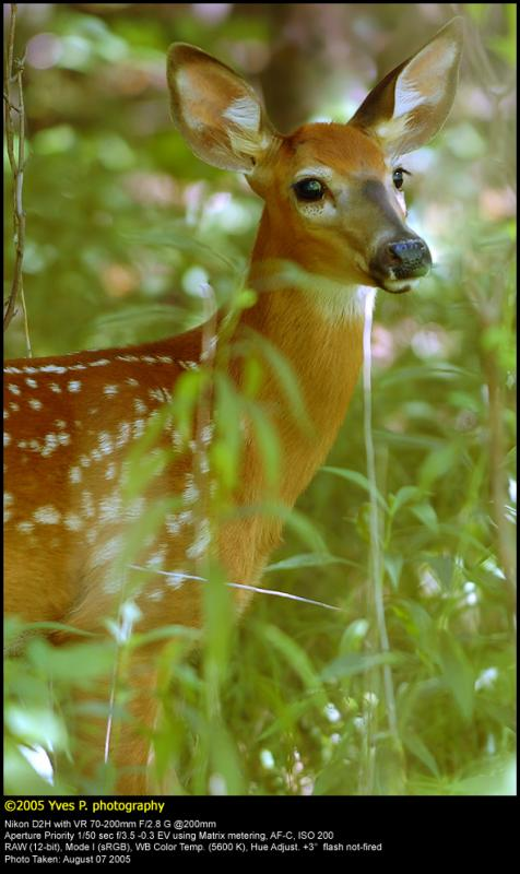 Fawn in the wild ...