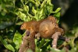Squirrels, Arusha