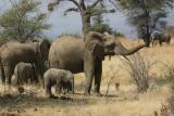 Elephants, Ruaha