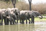 Elephant, Rufiji River