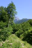 Waldstrasse