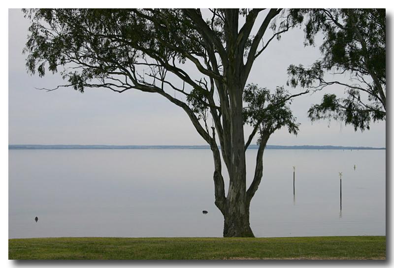 Eagle Point  - Black Swans - 1jpg.jpg