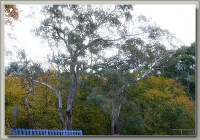 Colourful trees near Vet Clinic