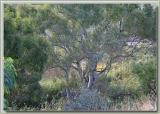 Jacob's Creek - gum creek no water - driest autumn on record!